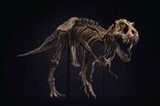 حراج اسکلت یکی از بزرگترین دایناسورهای «تیرکس»