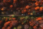 چگونه میتوان با فرهنگسازی مانع تخریب جنگل شد؟