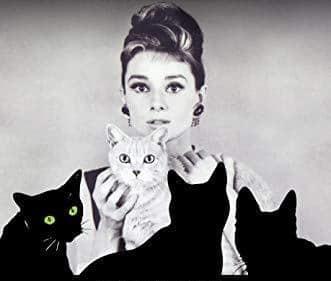 نه گربه روی پرده نقرهای