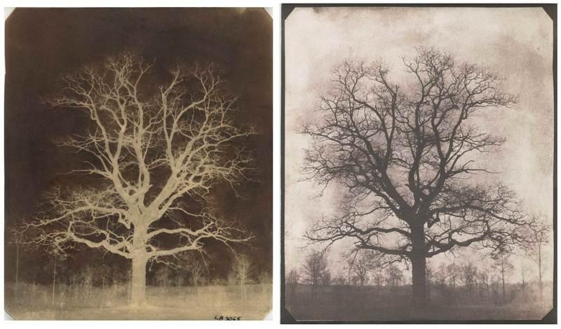 اولین نگاتیوِ عکاسی  جهان/ درخت بلوط در زمستان